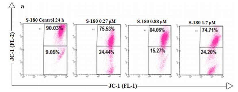 使用JC-1染料通过流式细胞仪检测线粒体膜电位