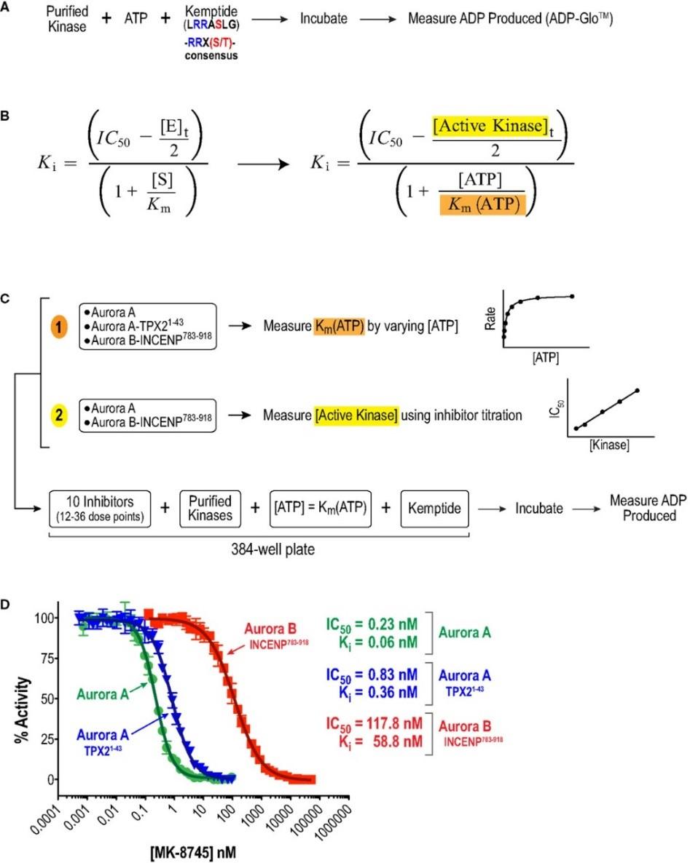 激酶筛选与分析服务