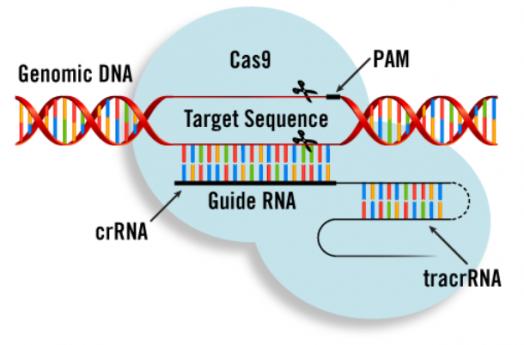 CRISPRCas9技術在基因治療領域的研究進展